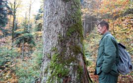 Goran Banjac nam pokazuje otiske kandži od medveda