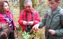 Upoznavanje sa biljkama