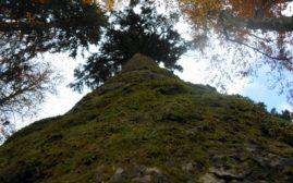 Iz ovog ugla se najbolje vidi veličina drveta